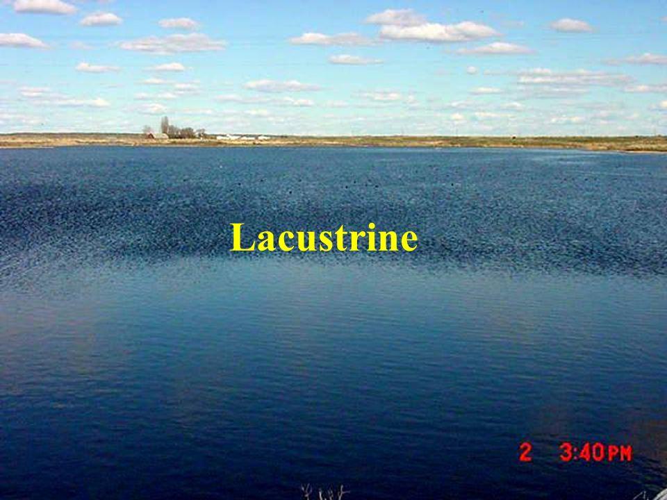 Lacustrine
