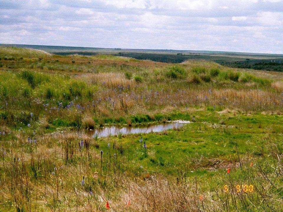 Project 199106100 SWANSON LAKES WILDLIFE AREA (SLWA)