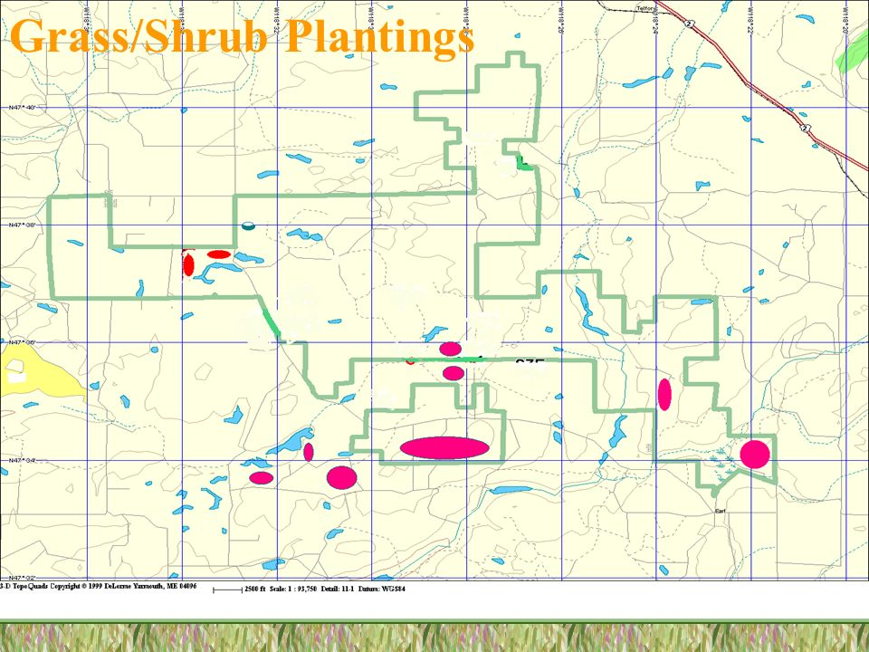 Grass/Shrub Plantings