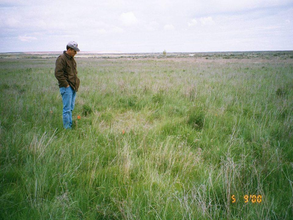 Yep, Looks Like Grass to Me!