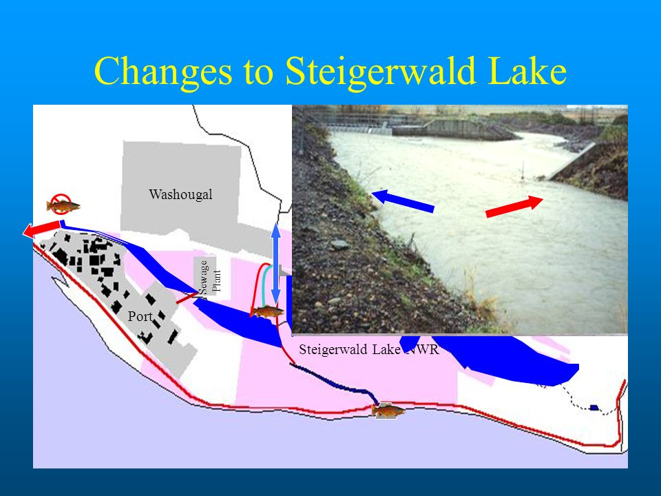 Feasibility Study Low Gradient Connectivity to Rearing/Spawning Habitat Improved Stream Habitat: Meanders Replace Channelization Flood Protection for Adjacent Landowners Ingress/Egress of Mainstem Salmonids Reconnect Gibbons Creek to Steigerwald Lake Improved Wetland Capacity/Hydrology