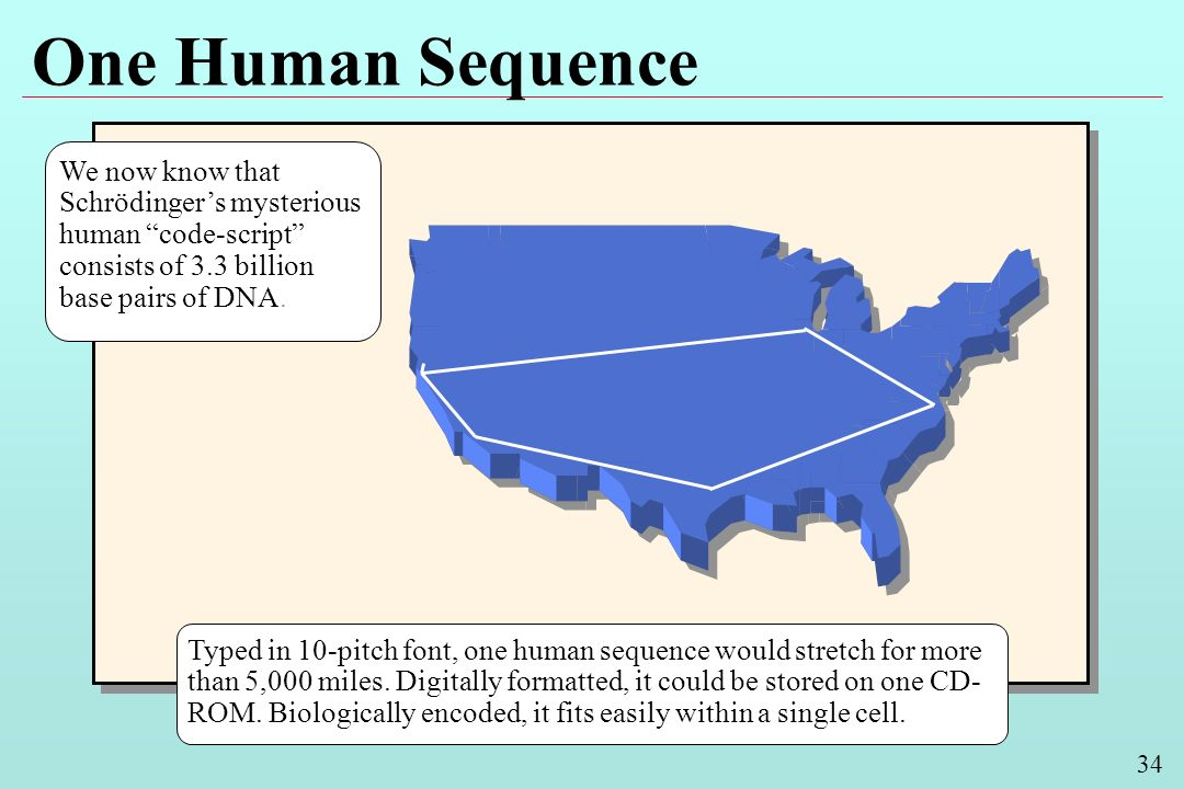 34 One Human Sequence Typed in 10-pitch font, one human sequence would stretch for more than 5,000 miles.