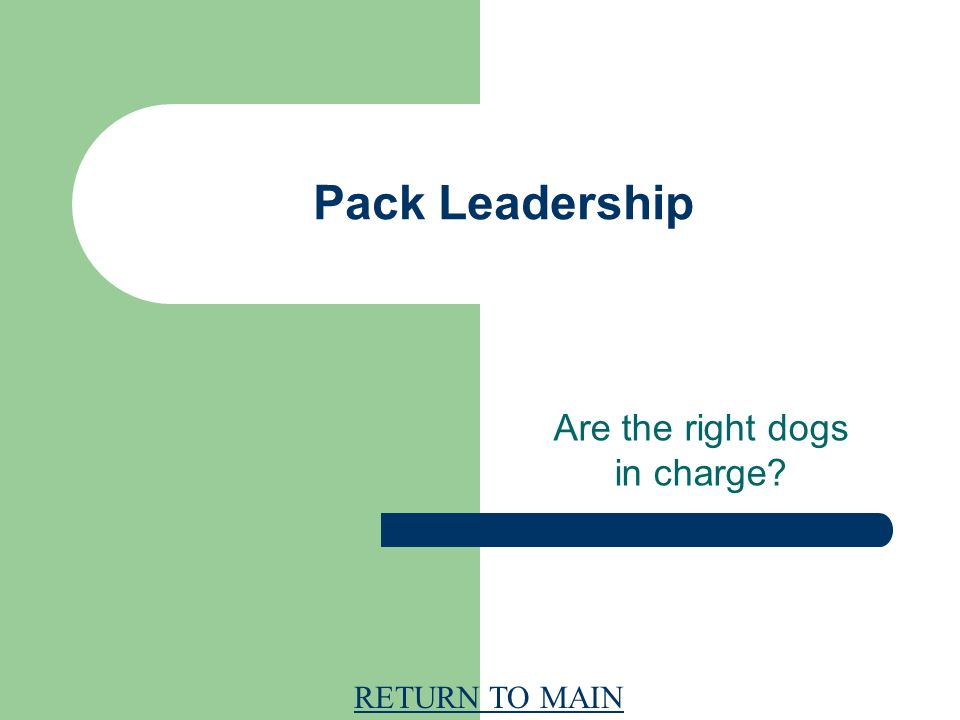 RETURN TO MAIN Pack Leadership Are the right dogs in charge