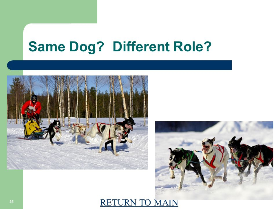 RETURN TO MAIN 25 Same Dog? Different Role?