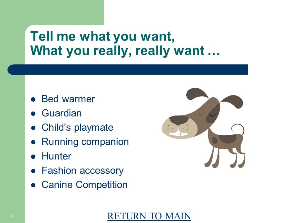 RETURN TO MAIN 5 Tell me what you want, What you really, really want … Bed warmer Guardian Childs playmate Running companion Hunter Fashion accessory Canine Competition