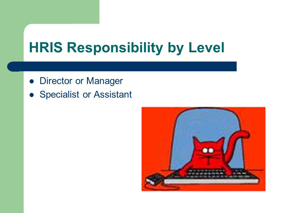 HRIS Responsibility by Level Director or Manager Specialist or Assistant
