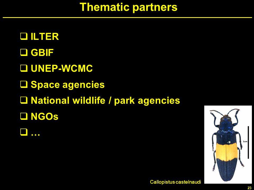 23 Thematic partners ILTER GBIF UNEP-WCMC Space agencies National wildlife / park agencies NGOs … Callopistus castelnaudi