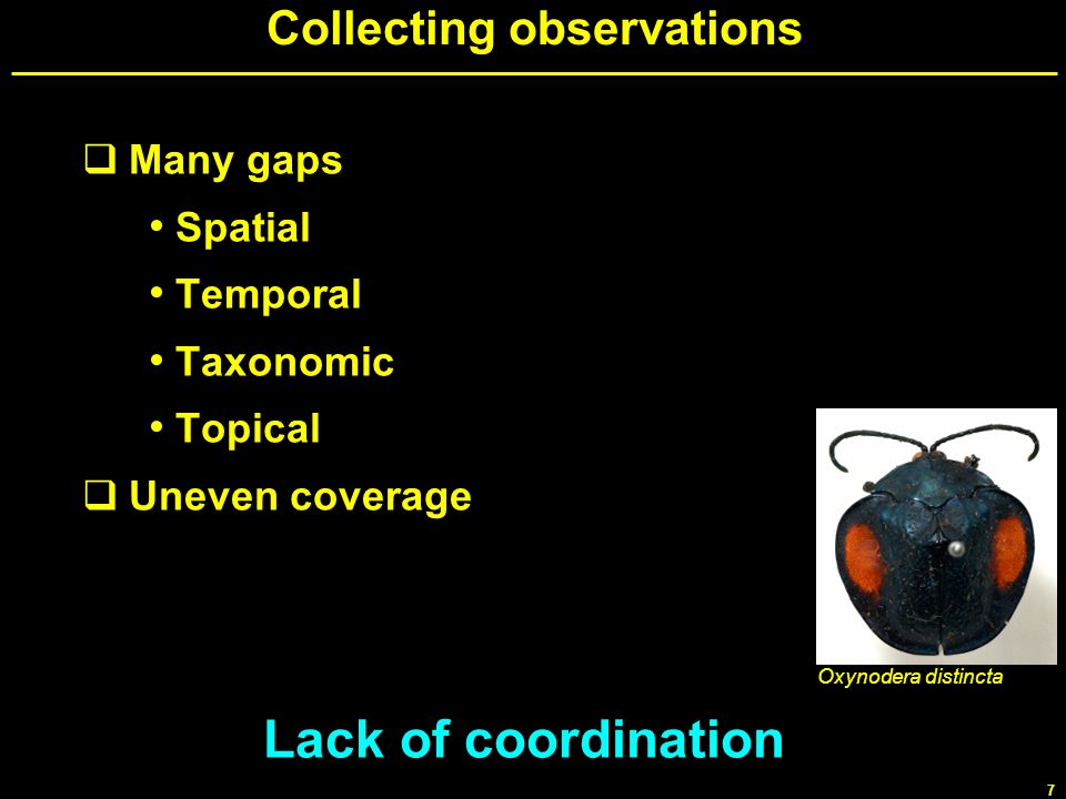 7 Collecting observations Many gaps Spatial Temporal Taxonomic Topical Uneven coverage Lack of coordination Oxynodera distincta
