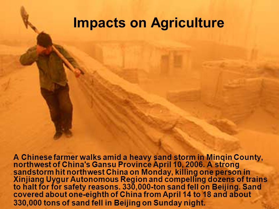 Impacts on Agriculture A Chinese farmer walks amid a heavy sand storm in Minqin County, northwest of China s Gansu Province April 10, 2006.