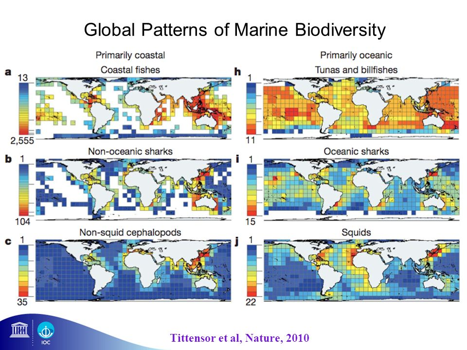 Global Patterns of Marine Biodiversity Tittensor et al, Nature, 2010