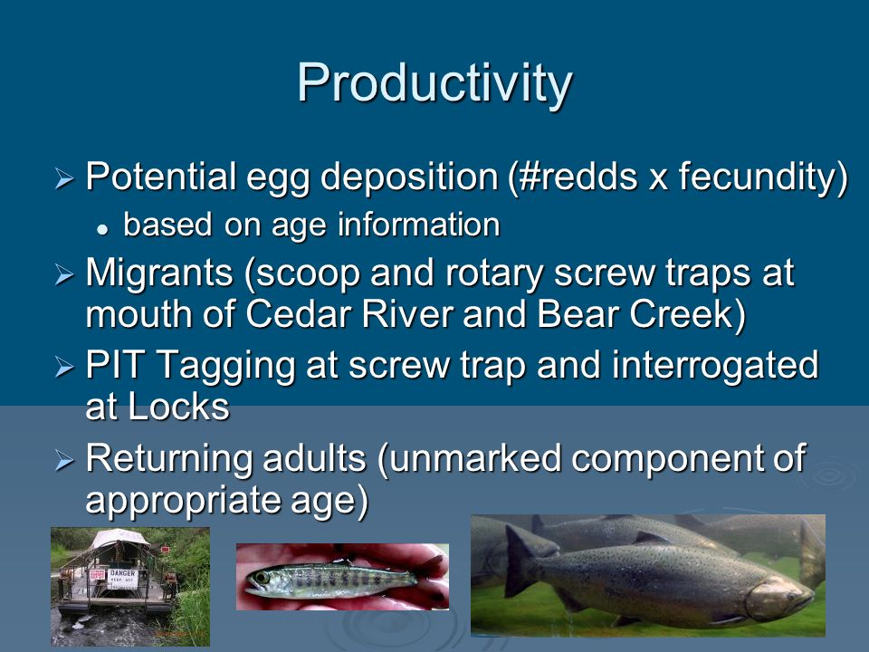 Productivity Potential egg deposition (#redds x fecundity) Potential egg deposition (#redds x fecundity) based on age information based on age informa