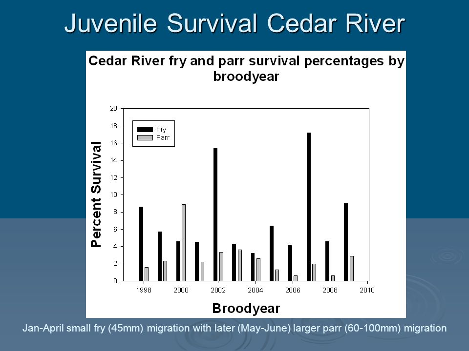Juvenile Survival Cedar River Jan-April small fry (45mm) migration with later (May-June) larger parr (60-100mm) migration
