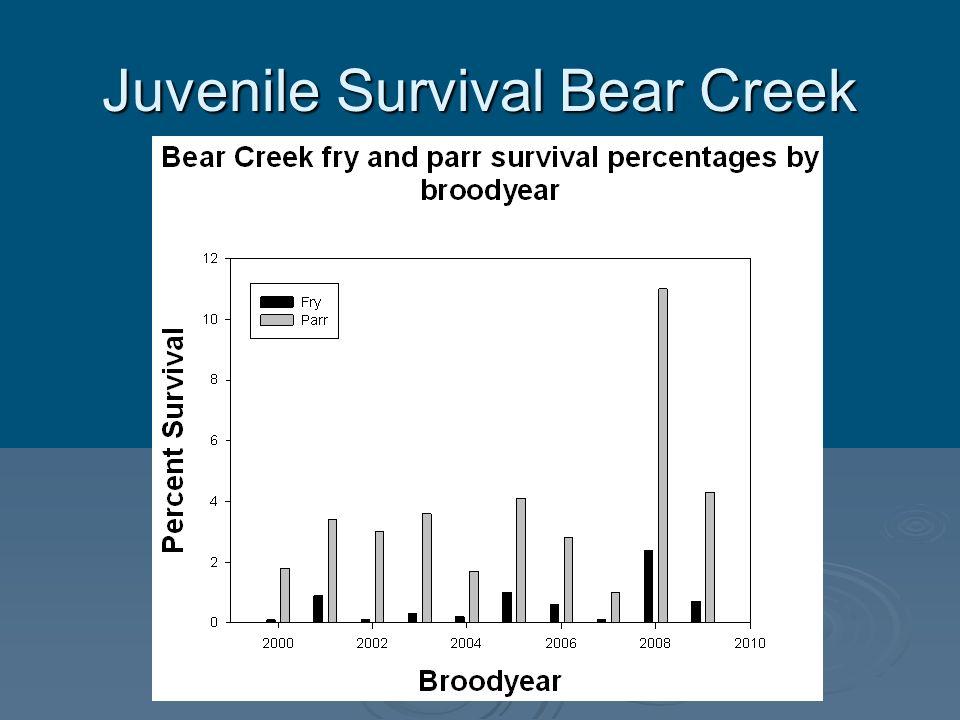 Juvenile Survival Bear Creek