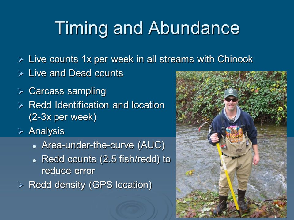 Timing and Abundance Live counts 1x per week in all streams with Chinook Live counts 1x per week in all streams with Chinook Live and Dead counts Live
