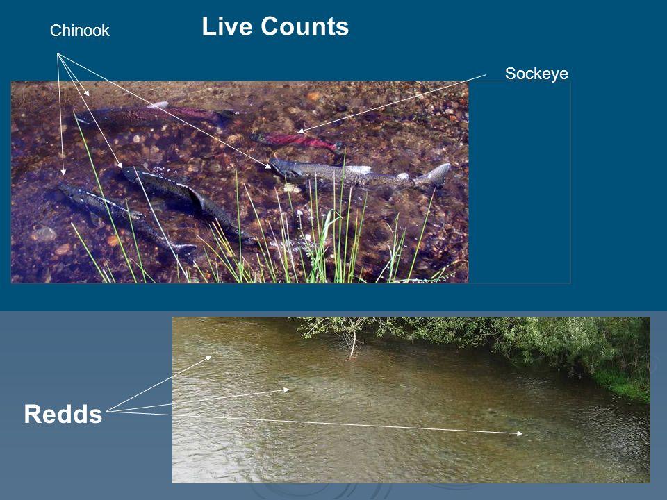 Live Counts Redds Sockeye Chinook
