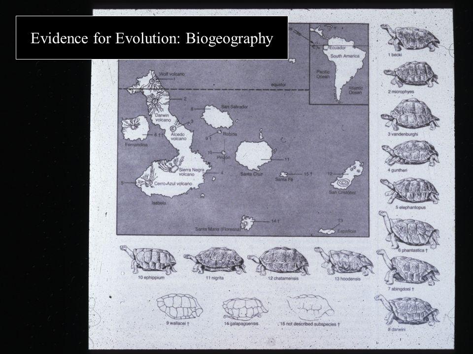Evidence for Evolution: Biogeography