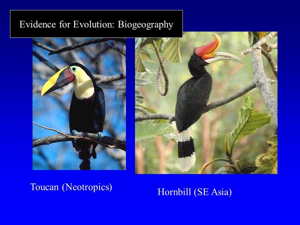 Toucan (Neotropics) Hornbill (SE Asia) Evidence for Evolution: Biogeography