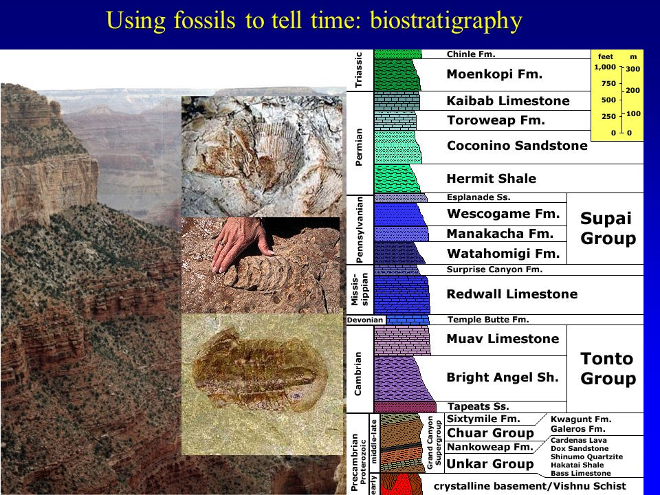 Using fossils to tell time: biostratigraphy