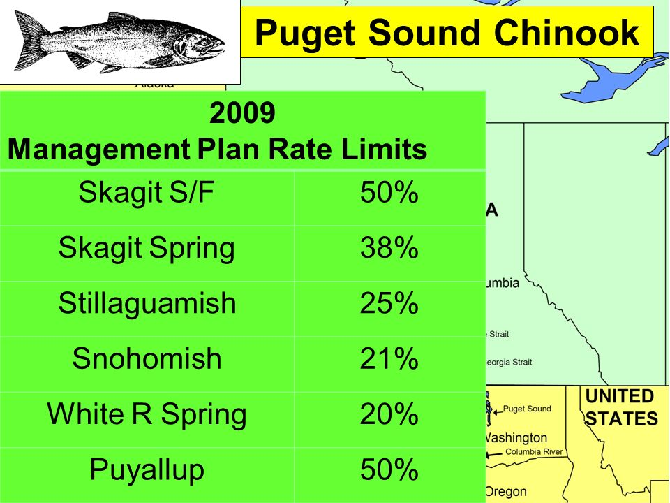 Puget Sound Chinook 2009 Management Plan Rate Limits Skagit S/F50% Skagit Spring38% Stillaguamish25% Snohomish21% White R Spring20% Puyallup50%