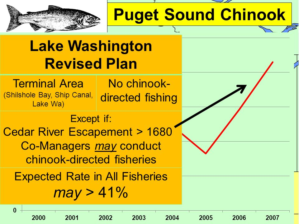 Puget Sound Chinook Lake Washington Revised Plan Terminal Area (Shilshole Bay, Ship Canal, Lake Wa) No chinook- directed fishing Except if: Cedar River Escapement > 1680 Co-Managers may conduct chinook-directed fisheries Expected Rate in All Fisheries may > 41%