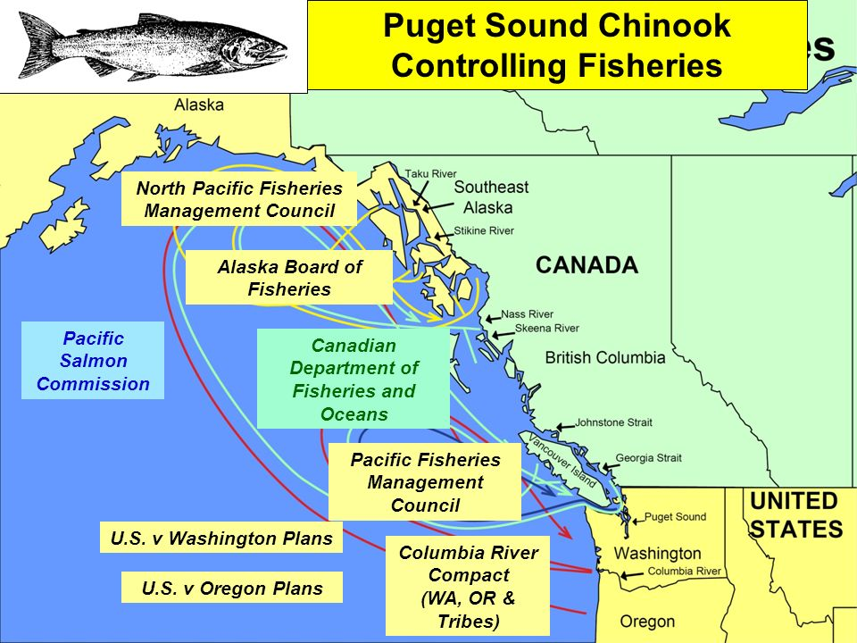 North Pacific Fisheries Management Council Alaska Board of Fisheries Pacific Salmon Commission Canadian Department of Fisheries and Oceans Pacific Fisheries Management Council Columbia River Compact (WA, OR & Tribes) U.S.