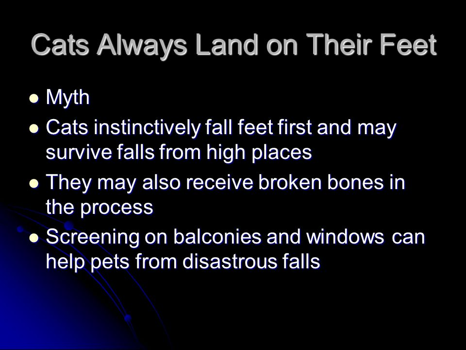 Cats Always Land on Their Feet Myth Myth Cats instinctively fall feet first and may survive falls from high places Cats instinctively fall feet first and may survive falls from high places They may also receive broken bones in the process They may also receive broken bones in the process Screening on balconies and windows can help pets from disastrous falls Screening on balconies and windows can help pets from disastrous falls