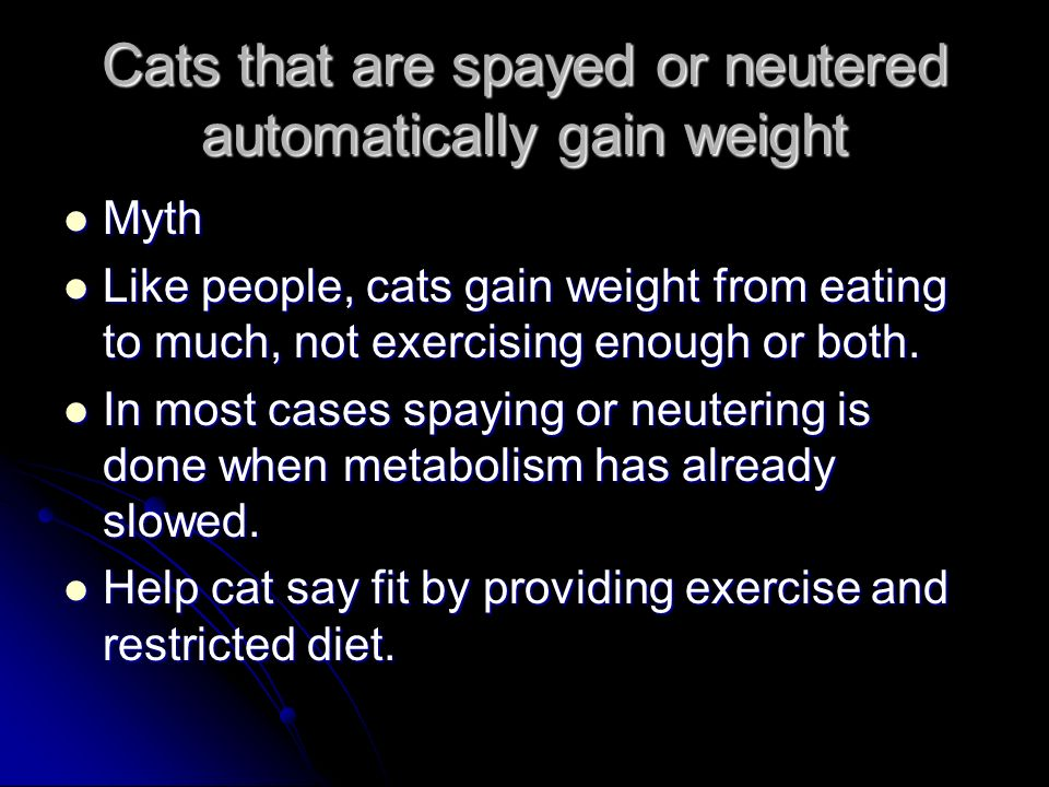 Cats that are spayed or neutered automatically gain weight Myth Myth Like people, cats gain weight from eating to much, not exercising enough or both.