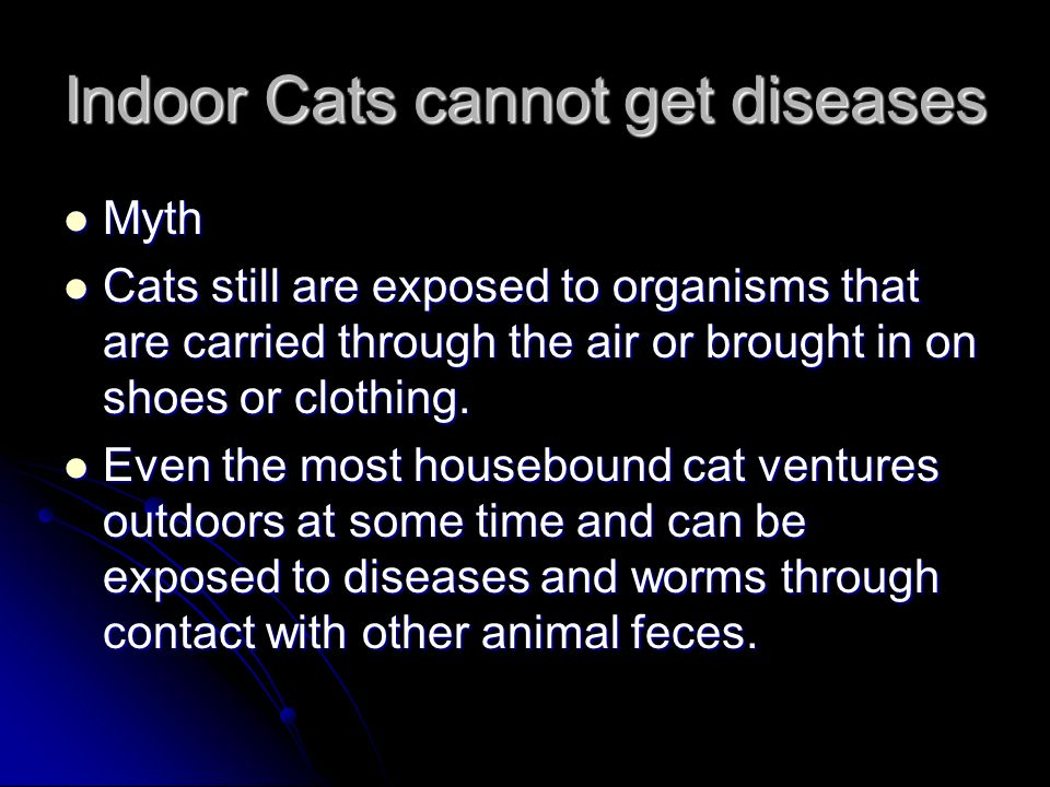Indoor Cats cannot get diseases Myth Myth Cats still are exposed to organisms that are carried through the air or brought in on shoes or clothing.