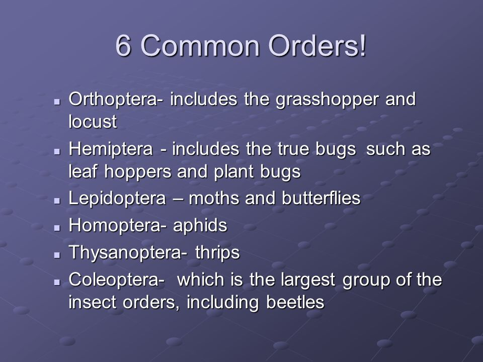 6 Common Orders! Orthoptera- includes the grasshopper and locust Orthoptera- includes the grasshopper and locust Hemiptera - includes the true bugs su