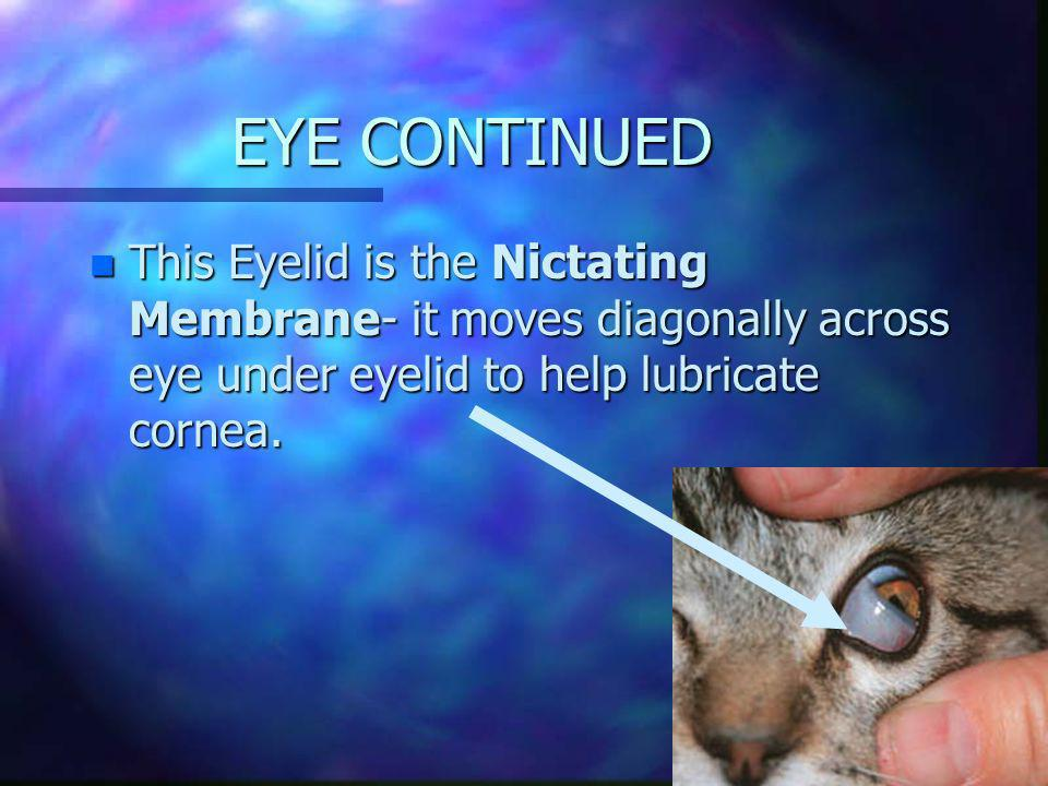 EYES n 3 dimensional vision n similar to other animals, but has some extra features! n Has three eyelids! Yes 3 eyelids!!