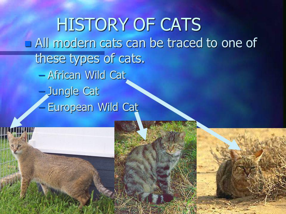 HISTORY BEHIND CATS n First n First cat appeared 35 million years ago. n Cats n Cats were were domesticated domesticated about 4000 years ago. Much la
