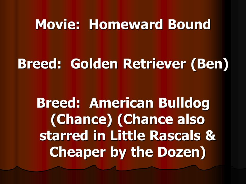 Movie: Homeward Bound Breed: Golden Retriever (Ben) Breed: American Bulldog (Chance) (Chance also starred in Little Rascals & Cheaper by the Dozen)