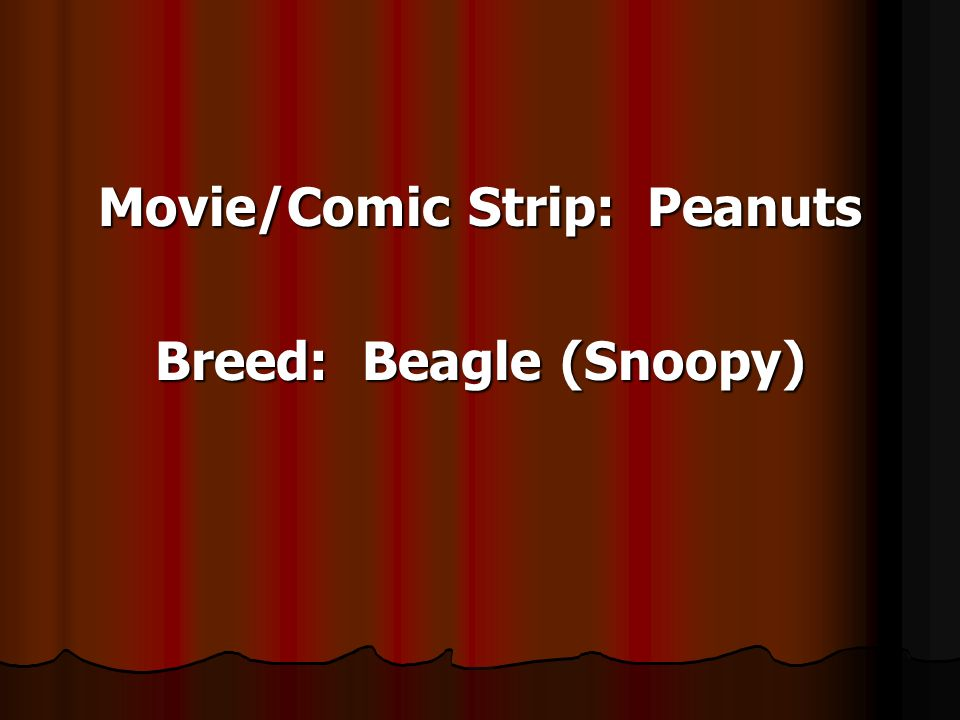 Movie/Comic Strip: Peanuts Breed: Beagle (Snoopy)