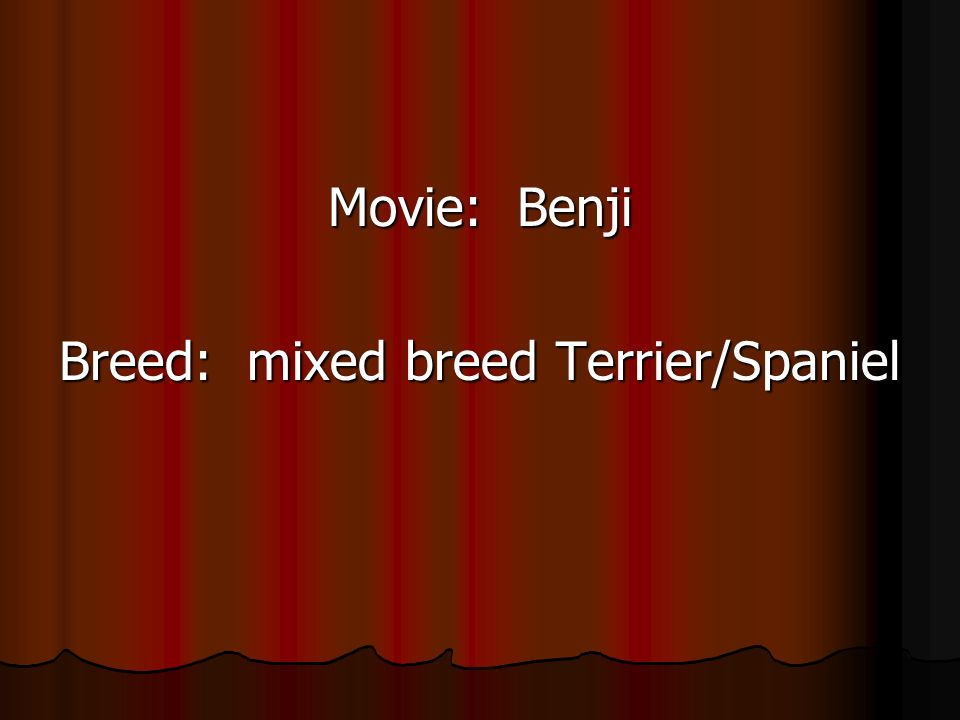 Movie: Benji Breed: mixed breed Terrier/Spaniel