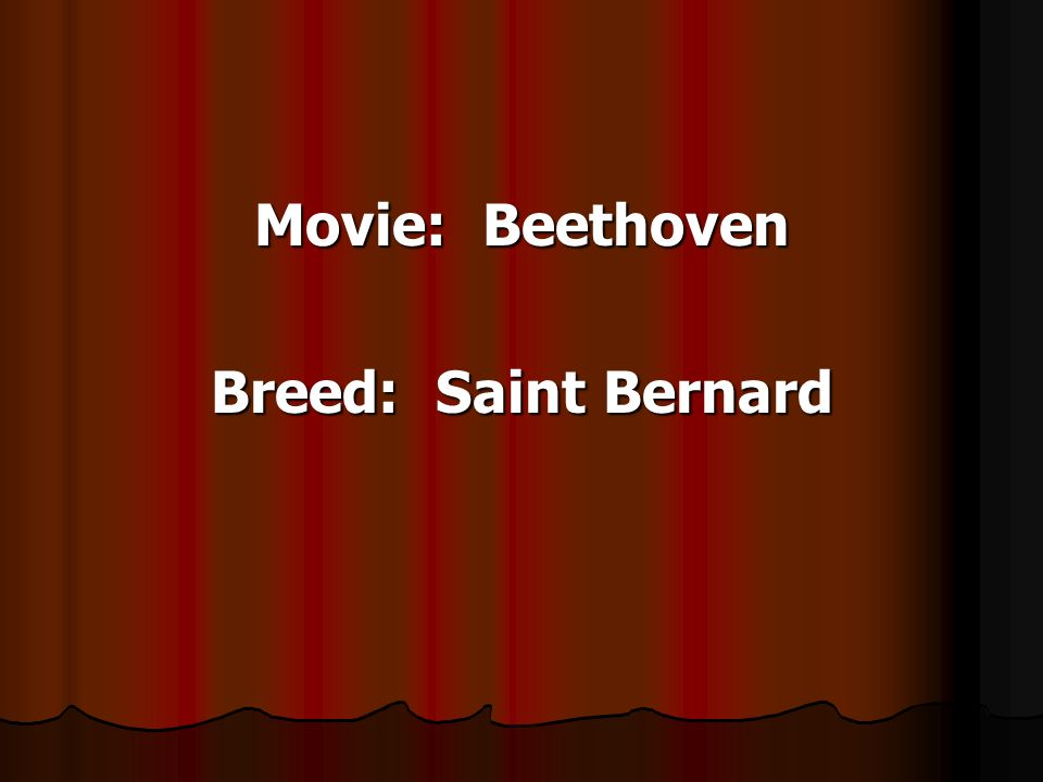 Movie: Beethoven Breed: Saint Bernard