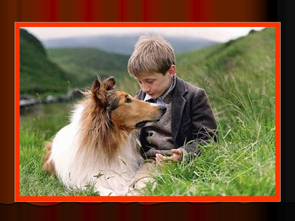 Movie: Lassie Breed: Collie