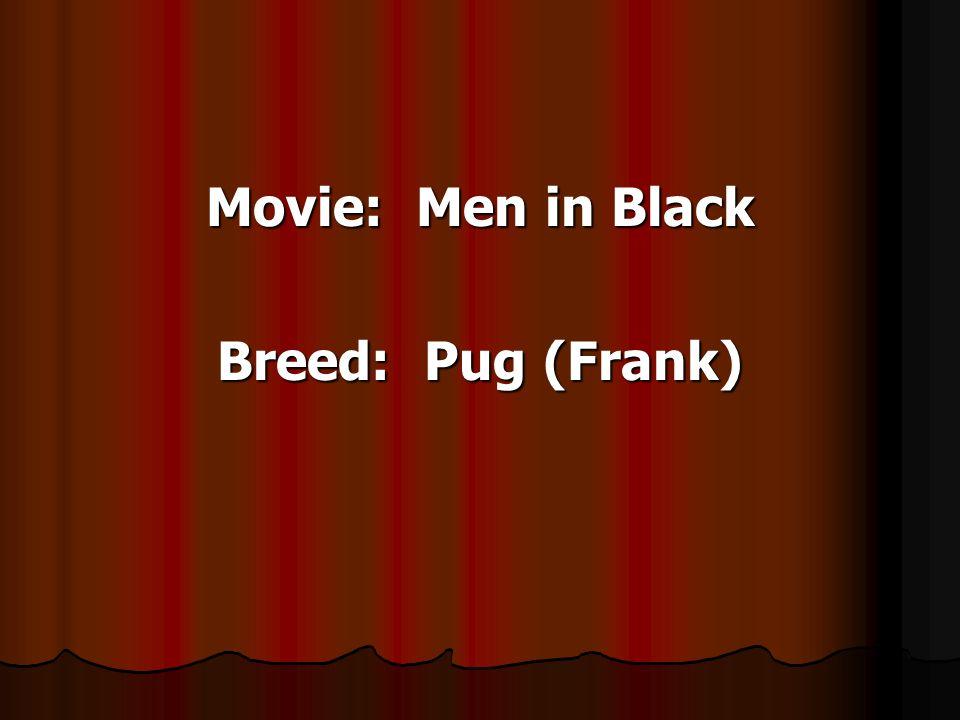 Movie: Men in Black Breed: Pug (Frank)