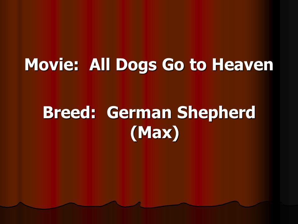Movie: All Dogs Go to Heaven Breed: German Shepherd (Max)