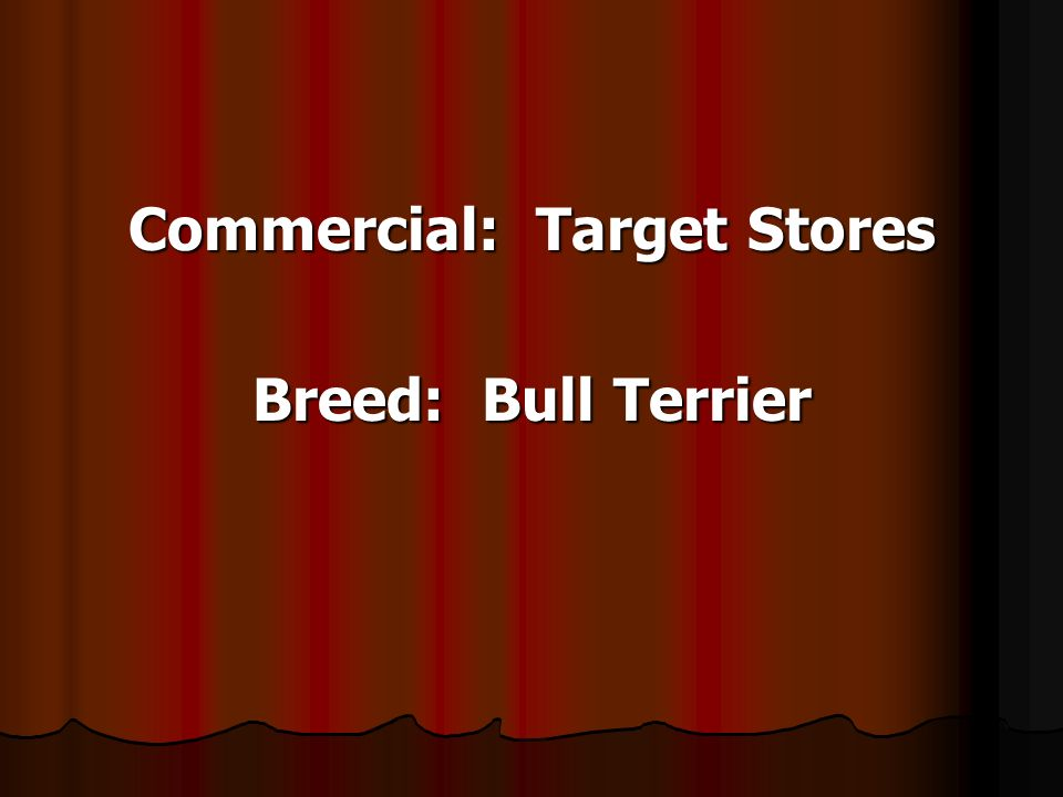 Commercial: Target Stores Breed: Bull Terrier