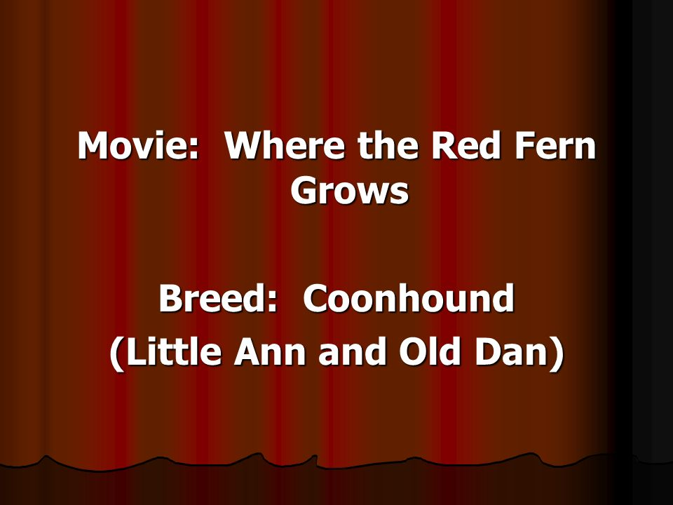 Movie: Where the Red Fern Grows Breed: Coonhound (Little Ann and Old Dan)