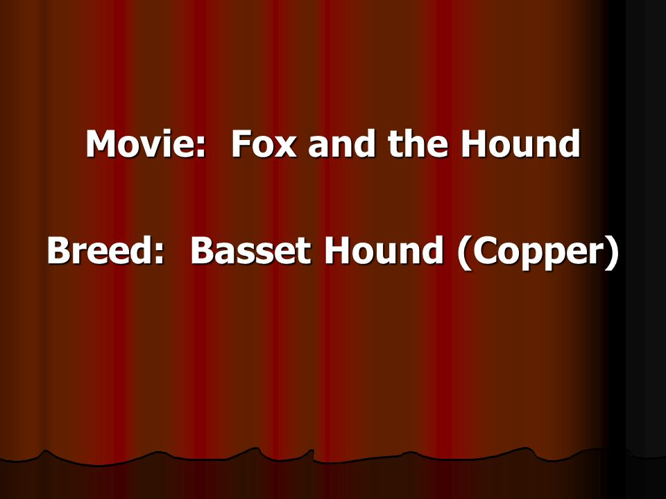 Movie: Fox and the Hound Breed: Basset Hound (Copper)