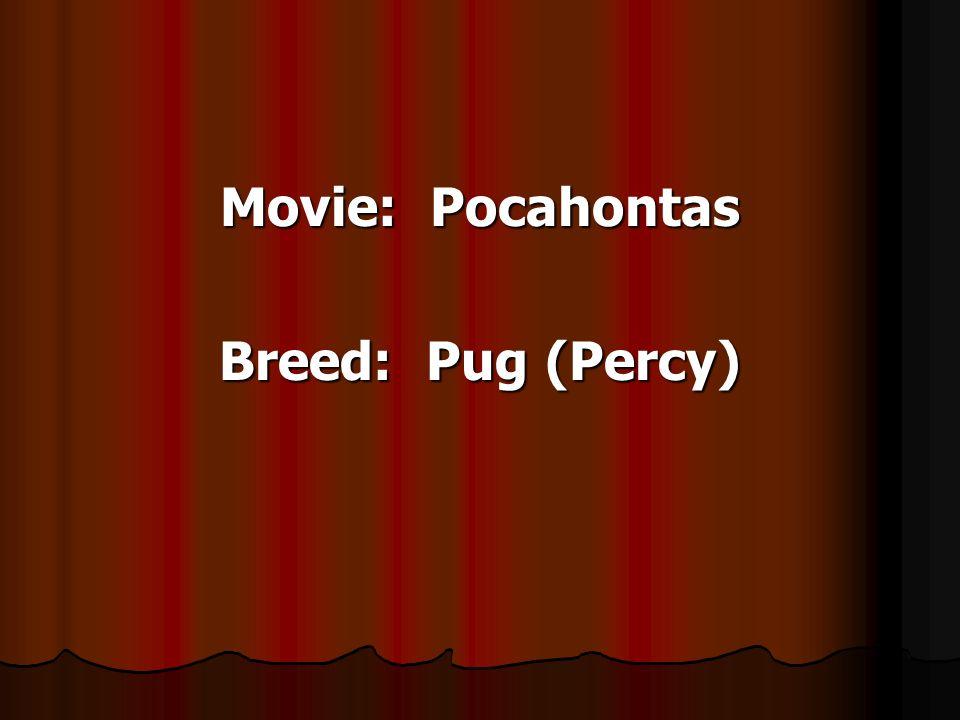 Movie: Pocahontas Breed: Pug (Percy)