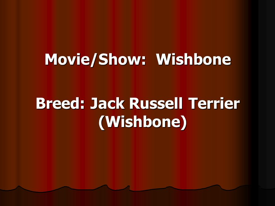 Movie/Show: Wishbone Breed: Jack Russell Terrier (Wishbone)