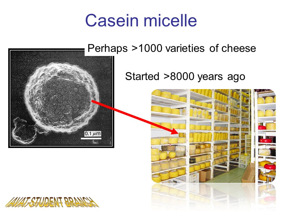Casein micelle Micelle structure Perhaps >1000 varieties of cheese Started >8000 years ago