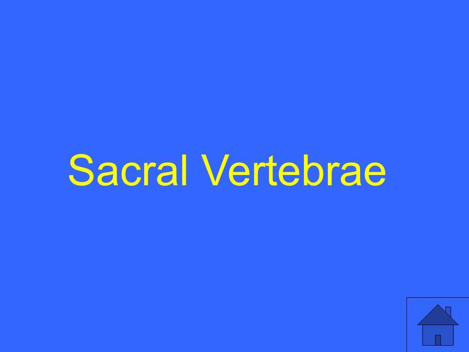 Sacral Vertebrae