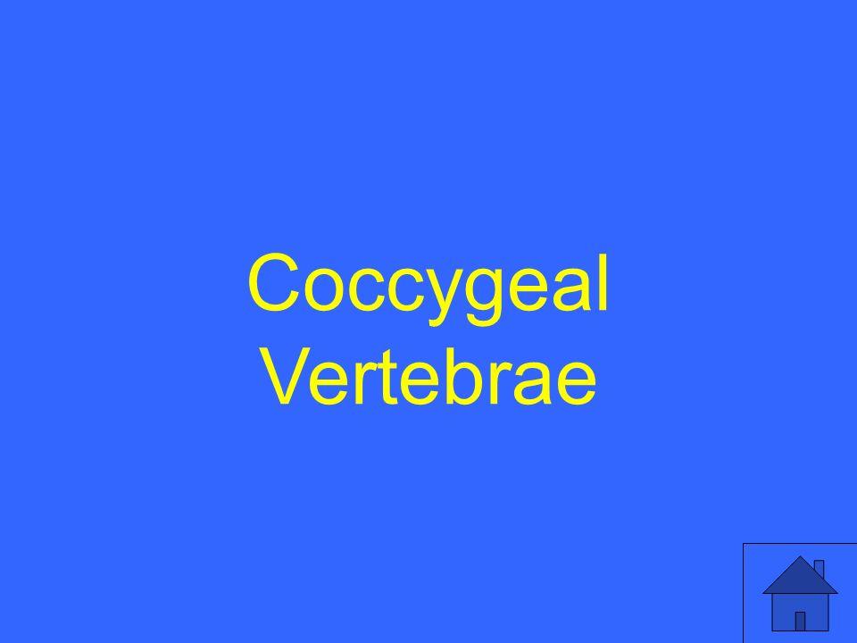 Coccygeal Vertebrae