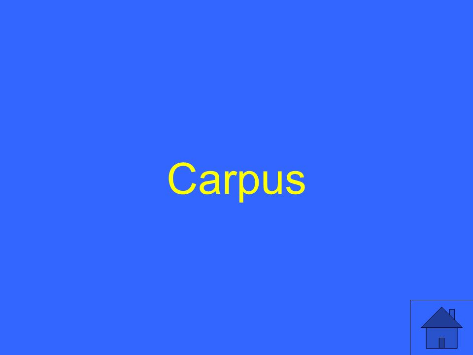 Carpus