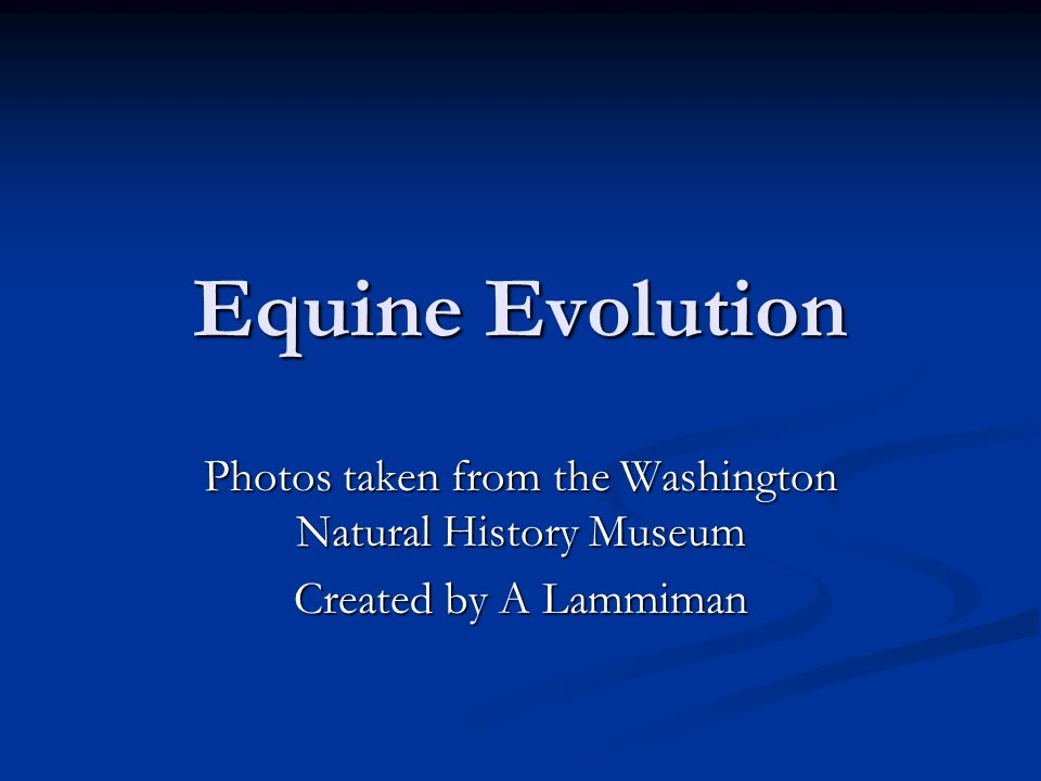 Equine Evolution Photos taken from the Washington Natural History Museum Created by A Lammiman