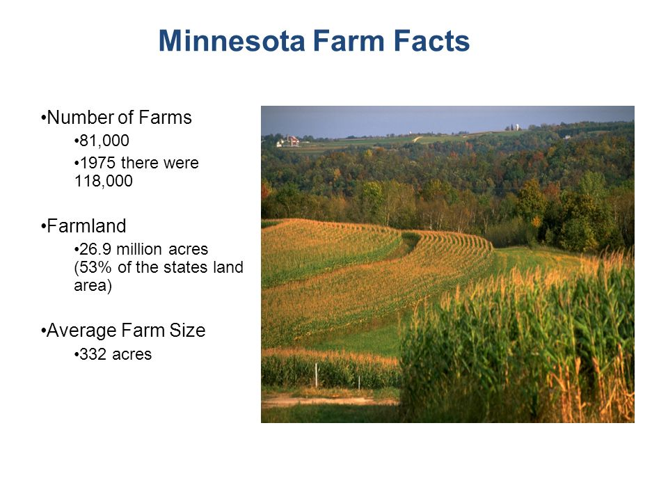 Minnesota Farm Facts Number of Farms 81,000 1975 there were 118,000 Farmland 26.9 million acres (53% of the states land area) Average Farm Size 332 acres