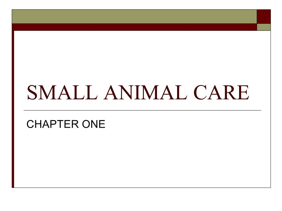 SMALL ANIMAL CARE CHAPTER ONE